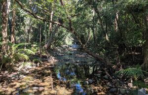 roshini daintree rainforest