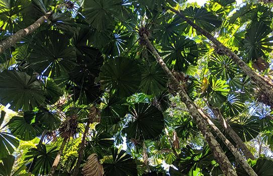 Roshini Australia Rainforest